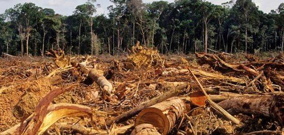 latte e deforestazione