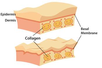 benefici del melograno
