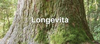Dieta della longevità del prof Valter Longo: è davvero (come dicono) l'approccio più solido e sicuro per vivere sani fino a 110 anni?