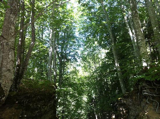 foresta casentinese