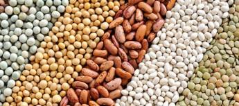 """PODCAST 1 – I fitati contenuti nei legumi, cereali integrali e semi sono """"vampiri dei minerali"""" o molecole salva-vita?"""